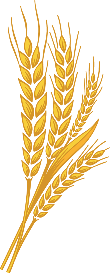 wheat of right side